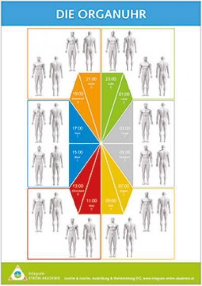 Grafik Organuhr